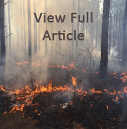 Wildfire Article